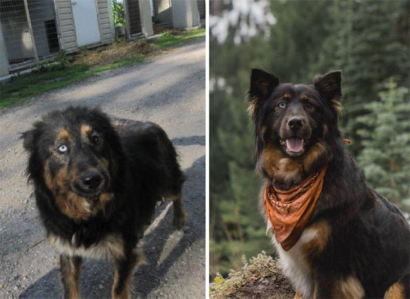 Rozczulające zdjęcia przed i po adopcji. Tak zmieniają się psy, kiedy ktoś je pokocha - 2